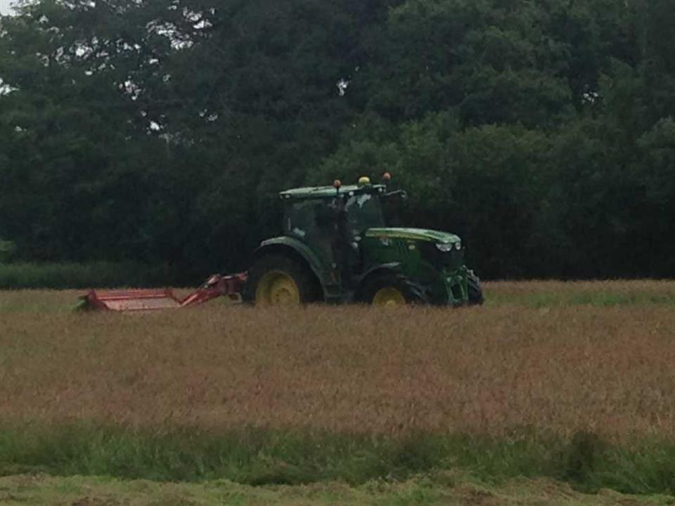 Cutting for Hay!