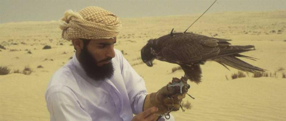 ESUG is work on sustainable use of Saker Falcons